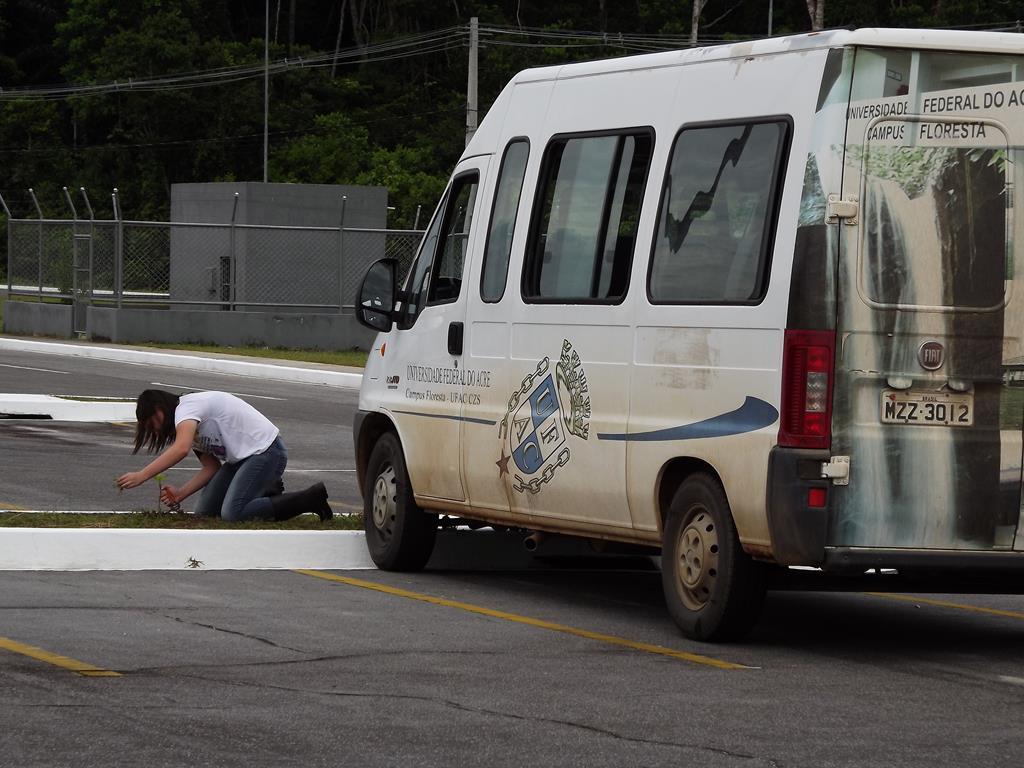 Manutenção de mudas - aeroporto de Cruzeiro do Sul